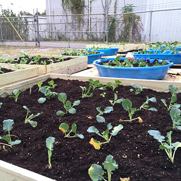 community gardens in tuscaloosa